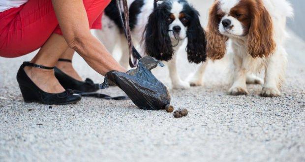 Ramasser les déjections canines